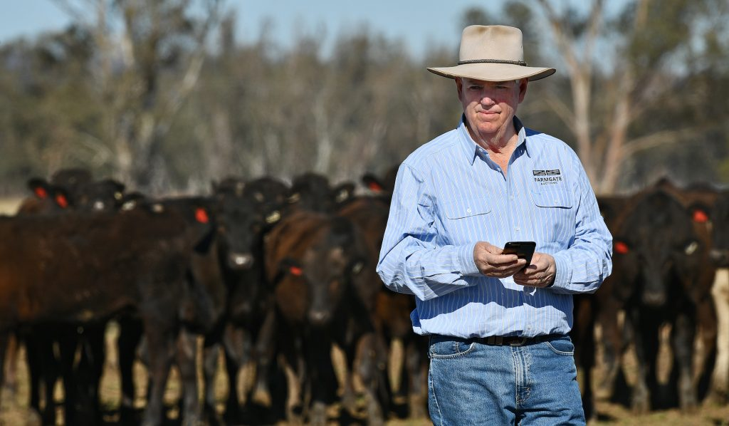 Weekly genetics review: Effectively using online marketing for bull sales - Beef Central